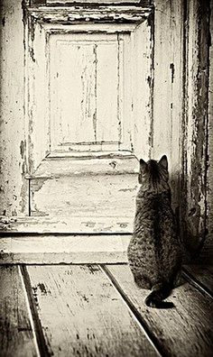 """(9) Twitter """"A cat's worst enemy is a closed door."""""""