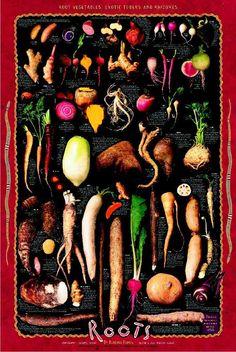 Roots,Tubers & Rhizomes Potatoes, Radish, Water Chestnut, Ginger, Ginseng, Beet, Galangal, Carrot, Lobok, Yam, Turnip, Rutabaga, Celeriac, Horseradish, Lotus Root, Parsley Root, Taro, Daikon, Turmeric, Scorzonera, Wasabi, Malanga, Salsify, Burdock, Gobo, Naga-Imo, Parsnip, Yuca, Jerusalem Artichoke, Jicama, Koklrabi