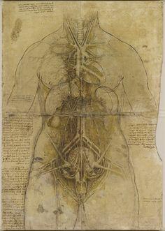 Leonardo da Vinci's anatomical drawings