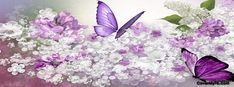 Lilac Delight Facebook Cover