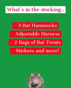Ratty Christmas Stocking Rat Harness, Rat Hammock, Cute Rats, Christmas Stockings, Needlepoint Christmas Stockings, Christmas Leggings, Stockings