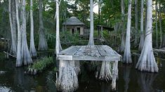 Boat Pov Abandoned Building Dock In Swamp Cypress Trees Spanish ...