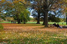 One of Leipzig's many parks during autumn.