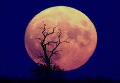 moon - Google zoeken