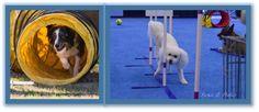 Dog Sports Classes Sports Dog, Save Save, Dog Training, Phoenix, Play, Dogs, Dog Training School, Pet Dogs, Doggies