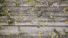 leafs.jpg (1920×1080)