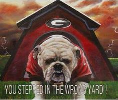 Funny Bulldog Pictures, Georgia Bulldogs Football, Georgia Girls, Dog Rules, Bulldog Puppies, Dog Cat, College Football, Animals, English Bulldogs