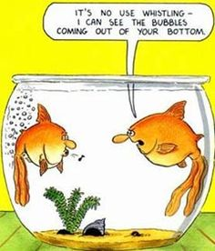 Funny toilets comedy in a fish farting cartoon with aquarium bubbles. A humor picture and funny flatulence comic strip bathroom joke. Funny Cartoons, Funny Jokes, Funniest Jokes, Gruseliger Clown, Funny Images, Funny Pictures, Animal Jokes, Funny Animal, Funny Picture Quotes
