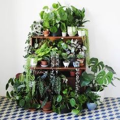 "Inspiration: ""An old picture, but I really love all the patterns, the different shades of green and the shapes of…"" Indoor Garden, Indoor Plants, Inside Plants, House Plants Decor, Different Shades Of Green, Plants Are Friends, Green Rooms, Interior Plants, Green Life"
