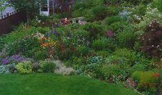 perennial garden in June zone 6