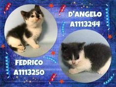 fostered - Two cute kittens are 5 weeks old - in ACC Foster Care