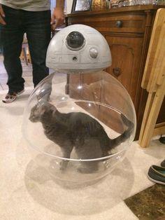 Comment fonctionne BB8 ? #starwars #bb8 #cat