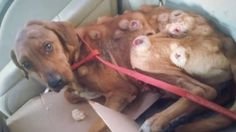 They were shocked at his condition, and quickly took him to Dalia Gamez, a local animal rights activist.