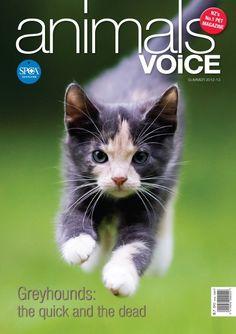 Animals' Voice - Summer issue