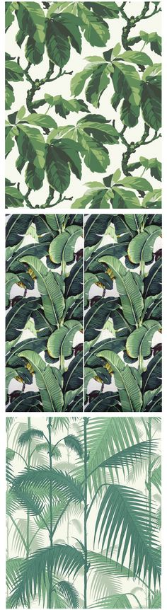first and last are my favorite Boråstapeters Oxford, Martinique's Beverly Hills Wallpaper och Cole & Sons Palm Jungle Of Wallpaper, Pattern Wallpaper, Tropical Wallpaper, Botanical Wallpaper, Textile Patterns, Print Patterns, Textiles, Illustration Arte, Palmiers
