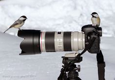 Shamik Photography ~ Devoted to the Natural Elements: My Assistants