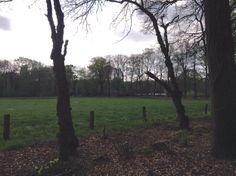 2014-04-13 Mooie knoestige acacia's bij De Kieftskamp