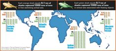An easy-to-follow infographic on shark bycatch rates in FAD & FAD-free fisheries.