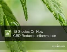 18 Studies On How CBD Reduces Inflammation - https://greenflowerbotanicals.com/18-studies-cbd-reduces-inflammation/