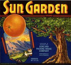 California Fruit Crate Labels   ... Sun Garden Orange Citrus Fruit Crate Label Advertising Art Print