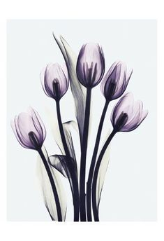Inspiration Tattoos, Xray Flower, Flower Art, Tulip Tattoo, Arte Floral, Anime Comics, Pretty Pictures, Find Art, Tulips