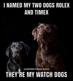 Rolex and Timex: watch dogs – dogmemes Cheesy Jokes, Corny Jokes, Funny Puns, Dad Jokes, Hilarious, Funny Stuff, Dog Stuff, Dnd Funny, Funny Emoji