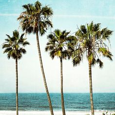 Palm Tree Photography Ocean Landscape California by BreeMadden