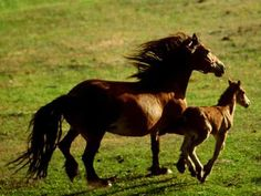 Mother and baby horse