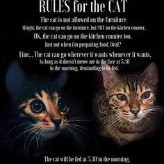 The cat... #bengal #rules #cat #kitten #instagram