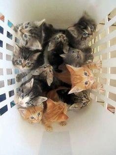 Basket Full of Kittens! #kittens #cats #adorable #cute