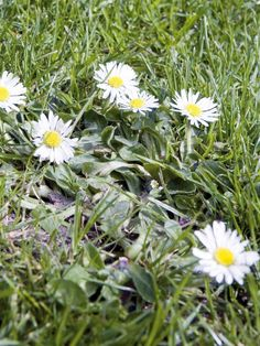 Use this photo gallery from HGTV to identify the types of lawn weeds growing in your yard.