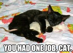 You had one job, cat! #cute #funny #animals #cat #mouse #meme