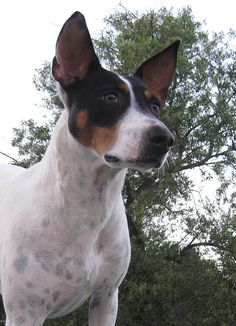 decker terrier