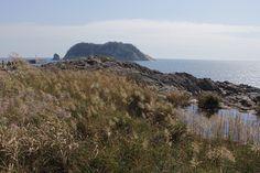 새연교와 연결된 새섬