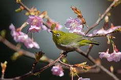 A spring envoy by Joe Motohashi on 500px