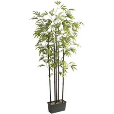 Pier One Bamboo Tree in Metal Container ($130) ❤ liked on Polyvore