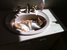 Even cats love bath vanity… Shower Speaker, Bathroom Wall Cabinets, Best Bathroom Vanities, Cat Sleeping, Amazing Bathrooms, Cat Love, Dog Bowls, Basin, Vanity