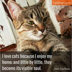 """""""I love cats because I enjoy my home..."""" - Jean Couteau #cats #quote http://www.tailsmart.com/i-love-cats-because-i-enjoy-my-home/"""