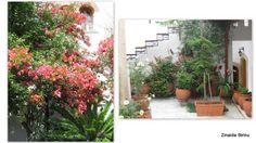 Zinnaida : Vegetație în Grecia (3) Nature, Greece, Plant, Naturaleza, Nature Illustration, Off Grid, Natural