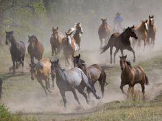 Wild horses | wild horses wallpaper wallpaper