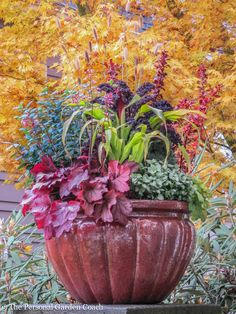 Colorful container garden with fine foliage http://www.seasonalwisdom.com/2015/02/designing-gardens-with-fine-foliage/