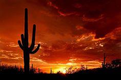 December in Green Valley, AZ - Romancing the Globe