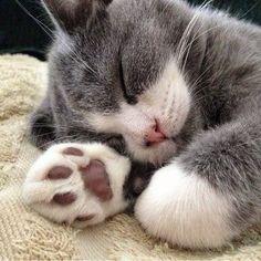 Simply paw-some !!