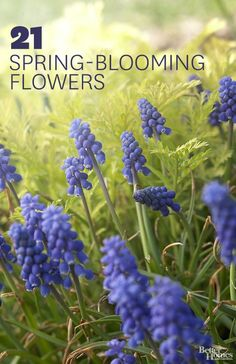 After a long winter, it's time for spring landscaping! Check out our list of early spring flowers: http://www.bhg.com/gardening/flowers/perennials/early-blooming-flowers/?socsrc=bhgpin030814springflowers&page=3