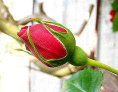 "Child Loss: A Poem of Remembrance, ""God's Rosebud"" - With Sympathy Gifts 