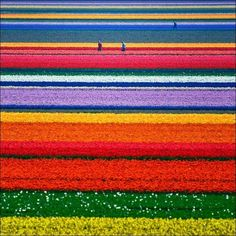 .field of color.               t