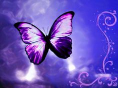 Wallpaper of Beautiful Butterflies for fans of yorkshire_rose. Butterfly Images, Butterfly Wallpaper, Butterfly Kisses, Purple Butterfly, Butterfly Design, Hd Wallpaper, Purple Flowers, Butterfly Artwork, Butterfly Background