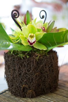"""On each table, there was a hapu`u fern """"vase"""" and my wedding planner used green cymbidium orchids, green spider mums, fern shoots, and other gorgeous flora..."""