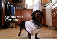 Crusoe in his Dog Chef Costume!