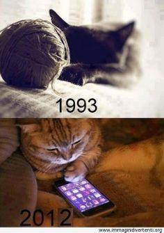 Gatti di allora e di oggi